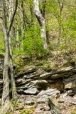 Vegetazione ed alberi sulle rocce fotografie stock