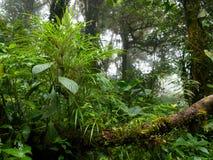 Vegetazione fertile e densa nella giungla Fotografie Stock