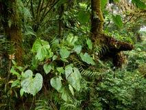 Vegetazione fertile e densa nella giungla Immagini Stock