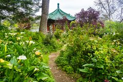 Vegetazione fertile in Golden Gate Park, San Francisco immagine stock