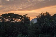 Vegetazione fertile lungo il fiume in Luang Prabang ad alba Fotografia Stock