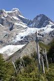 Vegetazione intorno ad un ghiacciaio a Torres del Paine Fotografia Stock Libera da Diritti