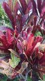 Vegetazione Kauai Immagine Stock