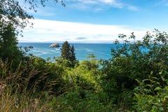 Vegetazione lungo la linea costiera di California vicino a Crescent City California immagine stock libera da diritti