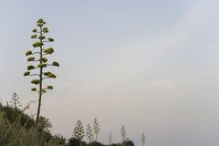 Vegetazione Mediterranea immagini stock