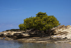 Vegetazione Mediterranea Fotografia Stock
