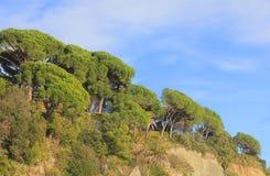 Vegetazione Mediterranea davanti al mare Fotografia Stock