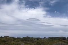 Vegetazione Mediterranea nell'isola di Mallorca Fotografia Stock