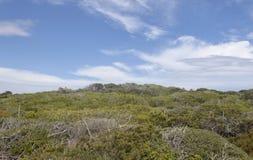 Vegetazione Mediterranea nell'isola di Mallorca Fotografia Stock Libera da Diritti