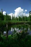 Vegetazione nel lago con gli alberi caduti immagini stock