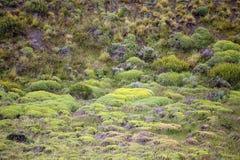 Vegetazione nel parco nazionale di Torres del Paine, regione del Magallanes, Cile del sud Immagine Stock Libera da Diritti