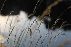 Vegetazione nel vento Fotografie Stock