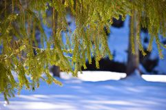 Vegetazione nell'inverno Immagine Stock