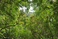 Vegetazione nella giungla Fotografie Stock