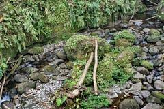 Vegetazione nella riserva ecologica di Cotacachi Cayapas Immagini Stock Libere da Diritti