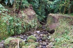 Vegetazione nella riserva ecologica di Cotacachi Cayapas Fotografie Stock