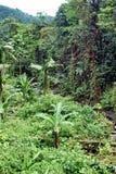 Vegetazione nella riserva ecologica di Cotacachi Cayapas Immagine Stock