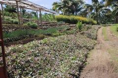 Vegetazione piacevole per agricoltura pendente Immagine Stock