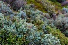 Vegetazione porpora nell'entroterra dell'Australia Fotografia Stock