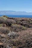 Vegetazione succulente nell'area vulcanica davanti alla linea costiera dell'isola di Tenerife, canarino, Spagna immagini stock libere da diritti
