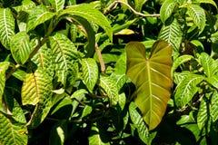 Vegetazione tropicale fotografia stock