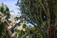 Vegetazione tropicale Immagine Stock