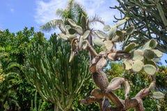 Vegetazione tropicale Fotografie Stock Libere da Diritti