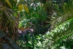 Vegetazione tropicale Fotografie Stock