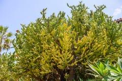 Vegetazione tropicale Immagini Stock Libere da Diritti