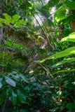 Vegetazione tropicale Fotografia Stock Libera da Diritti