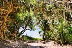 Vegetazione tropicale che fiancheggia un percorso alla spiaggia su Zamami, Okinawa fotografie stock libere da diritti