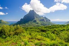 Vegetazione tropicale contro un blu Fotografia Stock Libera da Diritti