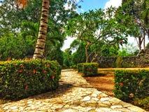 Vegetazione tropicale della località di soggiorno e percorso pavimentato di pietra immagini stock