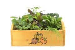Veggie patch Stock Photo