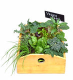 Veggie planter Royalty Free Stock Image