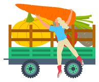 Veggie Transportation, Harvesting Season on Farm. Truck with vegetables for transportation vector, isolated woman with veggies. Potato and carrot, pumpkin in stock illustration