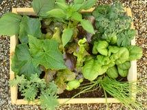 Veggies in a box Royalty Free Stock Photo