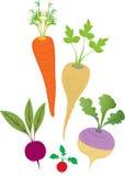 Veggies della radice di inverno royalty illustrazione gratis