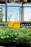 Veggies och blommor Fotografering för Bildbyråer