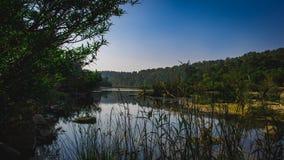 Vegitation вокруг озера стоковые фото