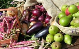 vegtables сада плодоовощ Стоковые Фотографии RF