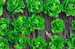 Vehículo verde Fotografía de archivo libre de regalías