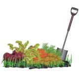 Vehículos de la cosecha del otoño en la hierba y la pala Fotos de archivo