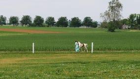 Vehículos del tren y de pasajeros del motor de vapor del vintage que llegan en el campo de Amish metrajes