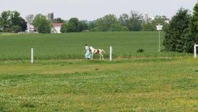 Vehículos del tren y de pasajeros del motor de vapor del vintage que llegan en el campo de Amish en un día de verano metrajes