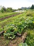 Vehículos en granja orgánica Imagenes de archivo