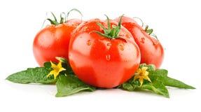 Vehículos frescos de los tomates fotografía de archivo libre de regalías