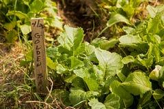 Vehículos orgánicos fotos de archivo