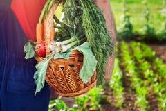 Vehículos orgánicos Cesta que lleva del granjero con las verduras Fotografía de archivo