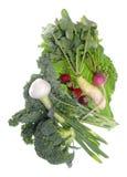 Vehículos orgánicos de la granja fresca Foto de archivo libre de regalías